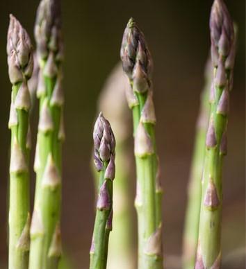 farm-shops-Cheshire-asparagus